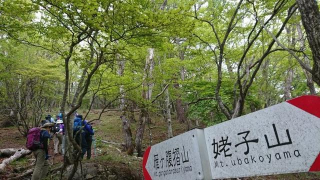 画像9: 6月2日に宮下ガイドの秀麗富岳十二景シリーズ第10回で 雁ヶ腹摺山 へ行ってきました♪