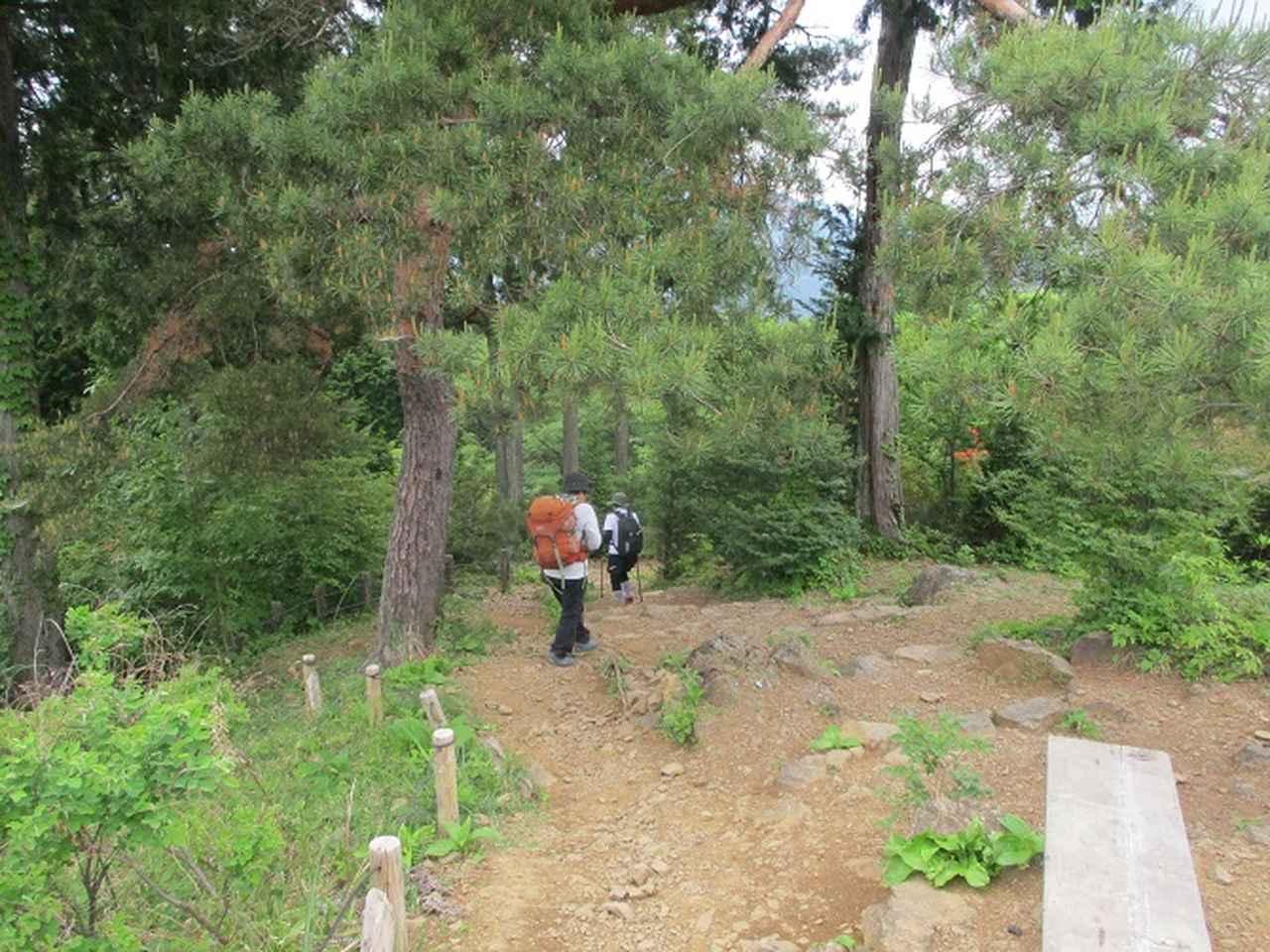 画像8: 6月1日に山旅会 「金毘羅尾根から日の出山」 ツアーに行ってきました!
