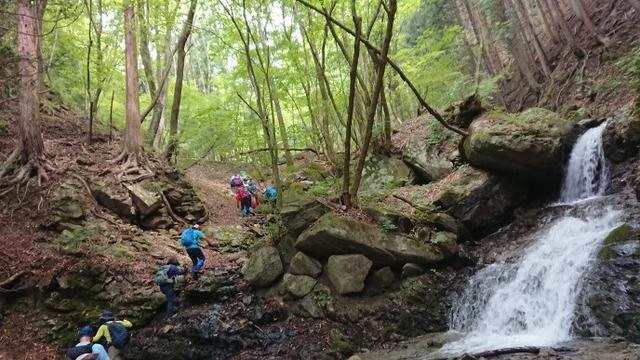 画像6: 6月2日に宮下ガイドの秀麗富岳十二景シリーズ第10回で 雁ヶ腹摺山 へ行ってきました♪