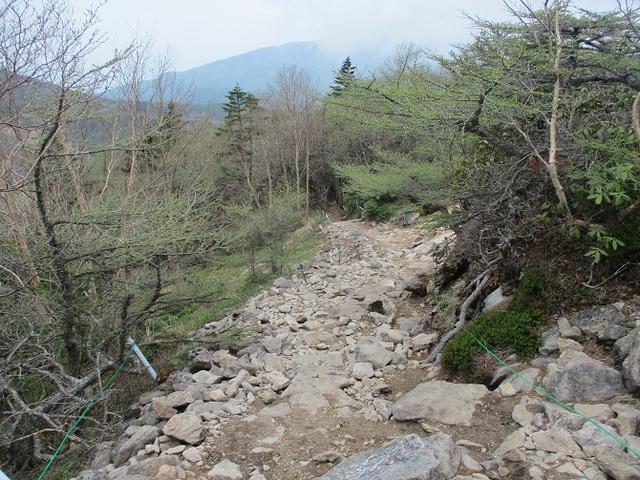 画像9: 6月の山旅会 「水ノ塔山から東篭ノ登山」 ツアーの下見に行ってきました!
