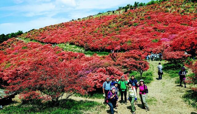 画像7: 本日は 大和葛城山 ツアー のご報告です♪