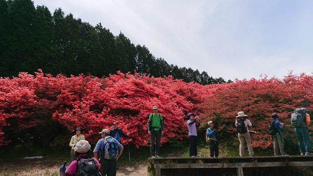 画像5: 本日は 大和葛城山 ツアー のご報告です♪