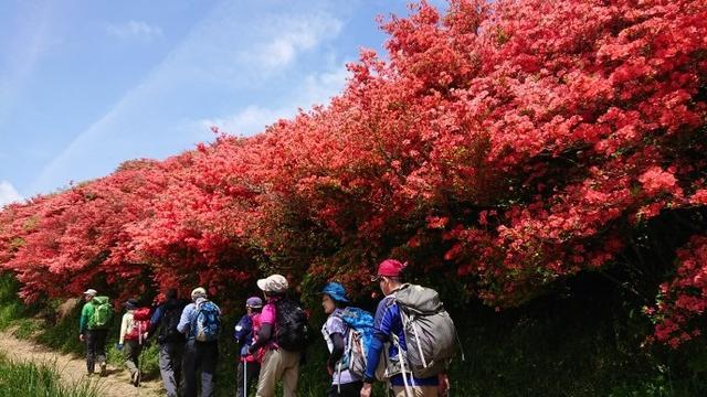 画像6: 本日は 大和葛城山 ツアー のご報告です♪