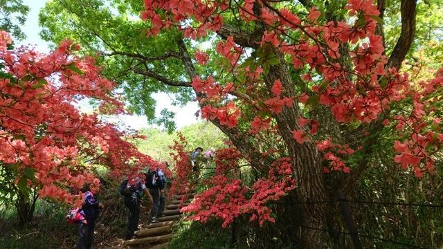 画像3: 本日は 大和葛城山 ツアー のご報告です♪