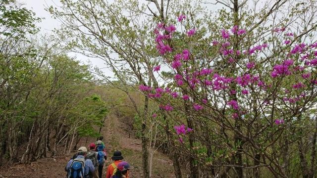 画像5: 本日は和歌山県の最高峰・ 龍神岳 ツアーのご報告です♪