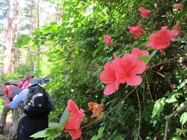 画像10: 岡田ガイドのハイキングコースで山梨県の 新倉山 へ行ってきました♪