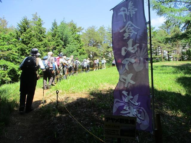 画像7: 岡田ガイドのハイキングコースで山梨県の 新倉山 へ行ってきました♪