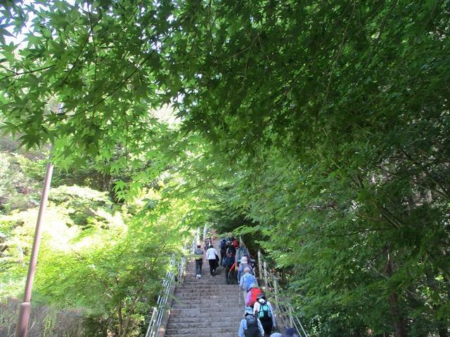 画像5: 岡田ガイドのハイキングコースで山梨県の 新倉山 へ行ってきました♪