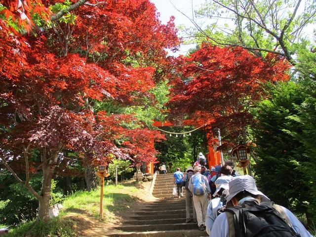 画像4: 岡田ガイドのハイキングコースで山梨県の 新倉山 へ行ってきました♪