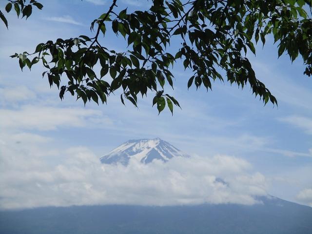 画像19: 岡田ガイドのハイキングコースで山梨県の 新倉山 へ行ってきました♪