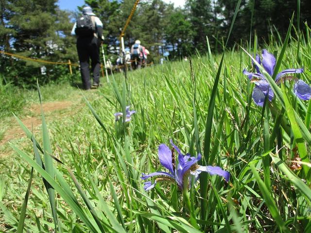 画像9: 岡田ガイドのハイキングコースで山梨県の 新倉山 へ行ってきました♪