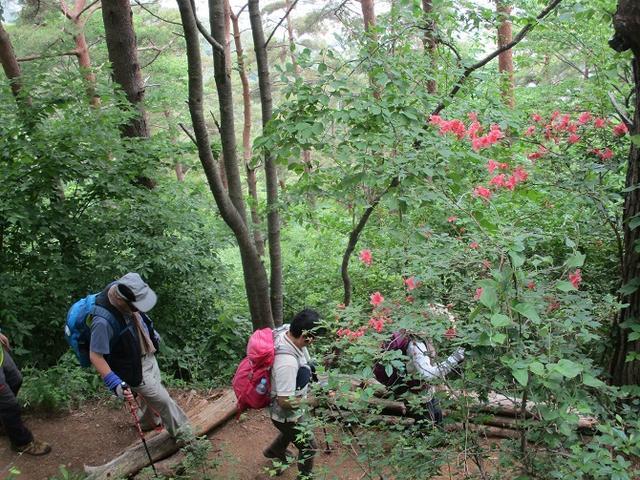 画像18: 岡田ガイドのハイキングコースで山梨県の 新倉山 へ行ってきました♪