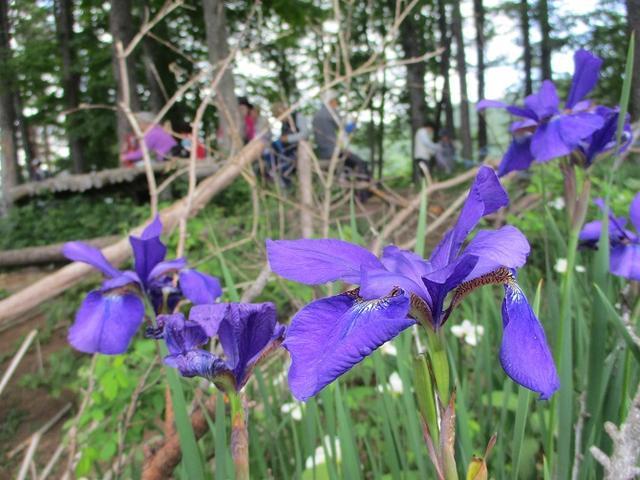 画像16: 岡田ガイドのハイキングコースで山梨県の 新倉山 へ行ってきました♪
