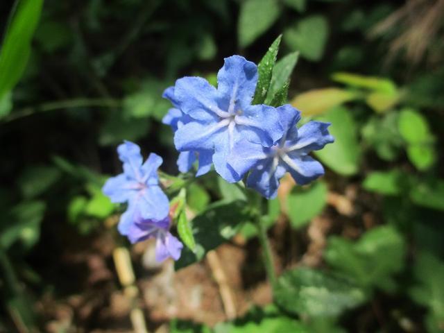 画像12: 岡田ガイドのハイキングコースで山梨県の 新倉山 へ行ってきました♪
