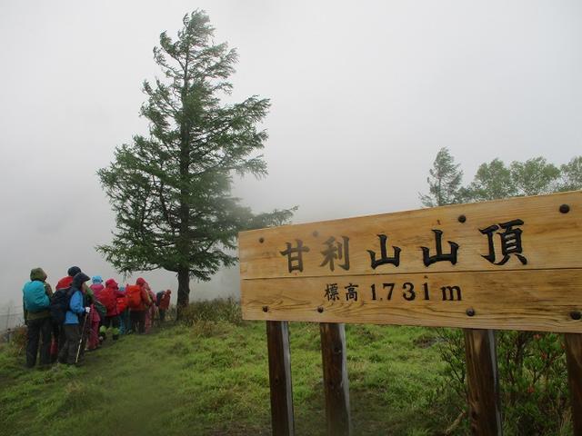 画像9: 岡田ガイドのコースで、山梨県のツツジで有名な 甘利山 へ行ってきました♪