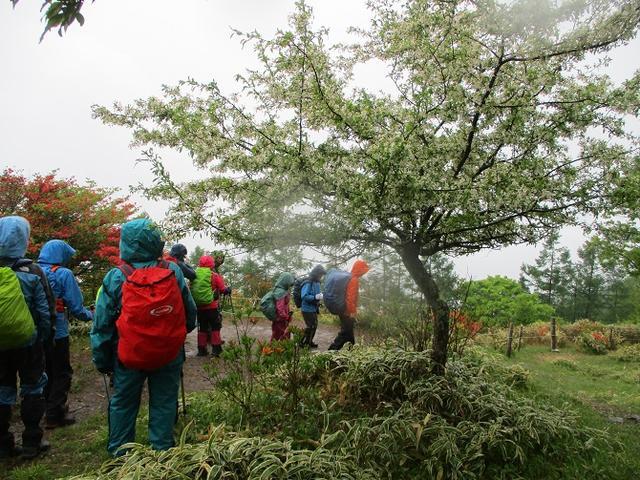 画像4: 岡田ガイドのコースで、山梨県のツツジで有名な 甘利山 へ行ってきました♪