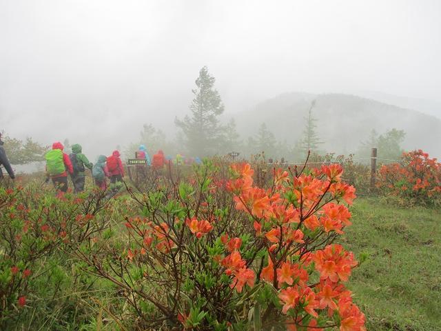 画像10: 岡田ガイドのコースで、山梨県のツツジで有名な 甘利山 へ行ってきました♪