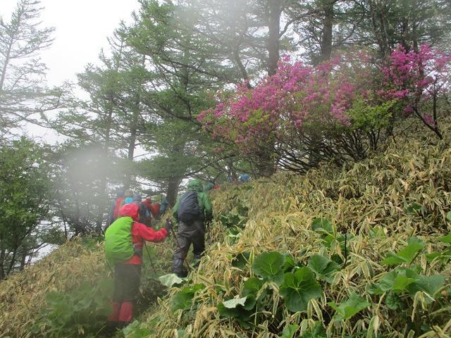 画像11: 岡田ガイドのコースで、山梨県のツツジで有名な 甘利山 へ行ってきました♪