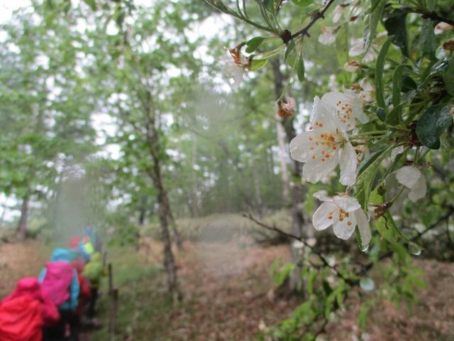 画像3: 岡田ガイドのコースで、山梨県のツツジで有名な 甘利山 へ行ってきました♪