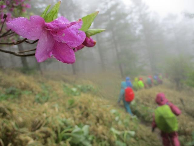 画像13: 岡田ガイドのコースで、山梨県のツツジで有名な 甘利山 へ行ってきました♪