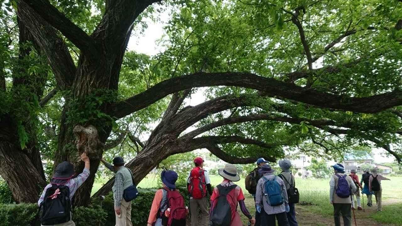 画像8: 穂苅先生のコースで、 さきたま古墳と古代蓮の里 へ久々の親子コンビで行って来ました♪