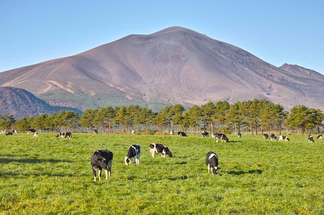 画像: 【第2回】浅間牧場  牧場認定ガイドとしか入れない新遊歩道をお楽しみ下さい
