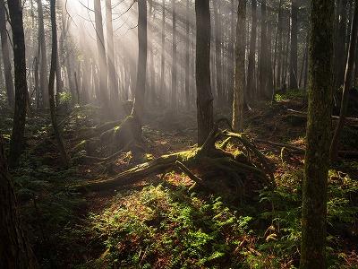 画像: <ハイキング初級>『絶対にひとりでは行けない旅 第1回 青木ヶ原樹海深部の神秘を探る』日帰り|クラブツーリズム