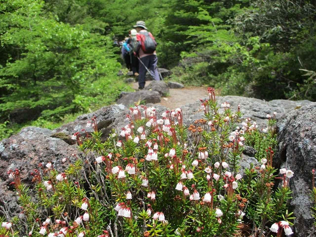 画像4: 【山旅会・登山ガイドこだわりツアー】添乗員からの便り・水ノ塔山から東篭ノ登山ツアーに行ってきました!