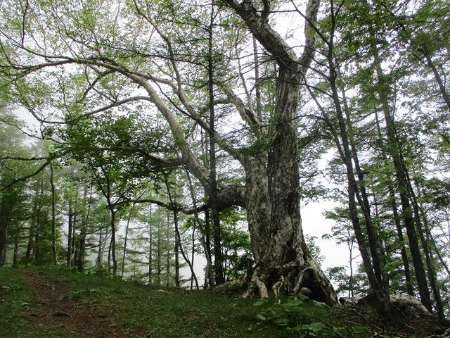 画像4: 7月の山旅会 「櫛形山」 ツアーの下見に行ってきました!