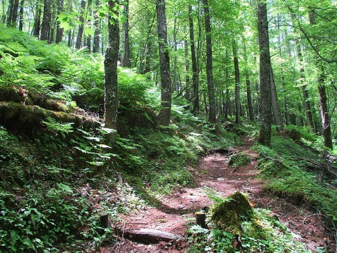 画像2: 7月の山旅会 「櫛形山」 ツアーの下見に行ってきました!