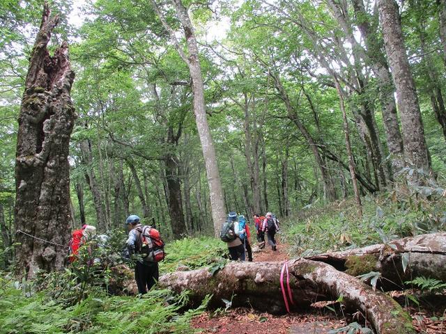画像13: 岡田ガイドのハイキングコースで 「玉原湿原」 へ行ってきました♪