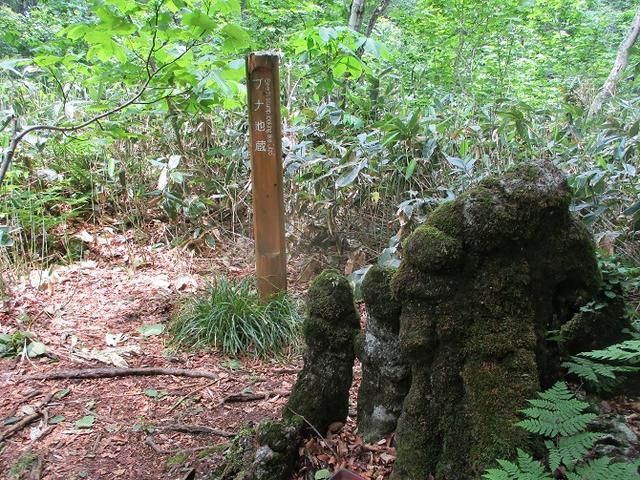 画像14: 岡田ガイドのハイキングコースで 「玉原湿原」 へ行ってきました♪