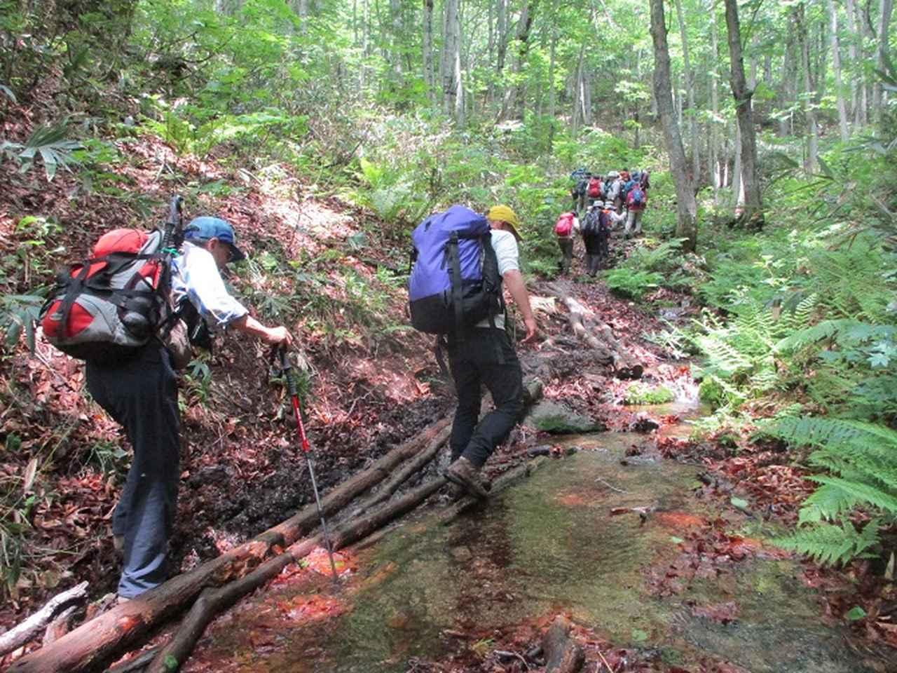 画像8: 岡田ガイドのハイキングコースで 「玉原湿原」 へ行ってきました♪