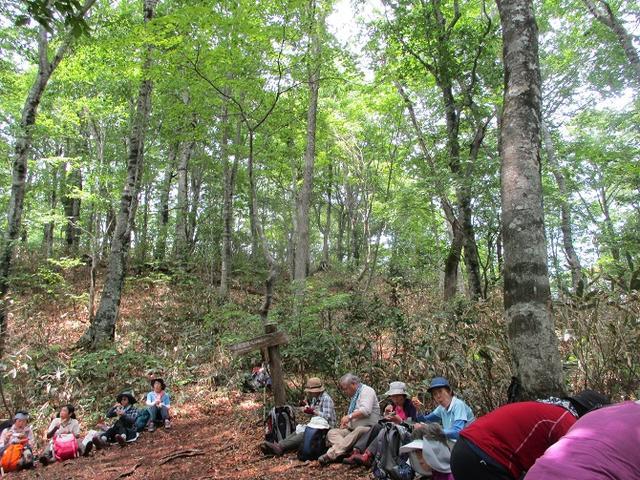 画像9: 岡田ガイドのハイキングコースで 「玉原湿原」 へ行ってきました♪