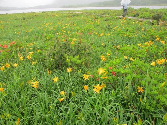 画像7: 6月24日より山旅会 「雄国沼と西吾妻山」 ツアーに行ってきました!