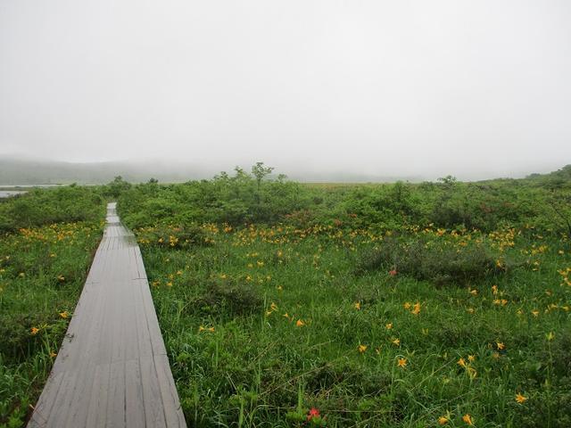 画像6: 6月24日より山旅会 「雄国沼と西吾妻山」 ツアーに行ってきました!