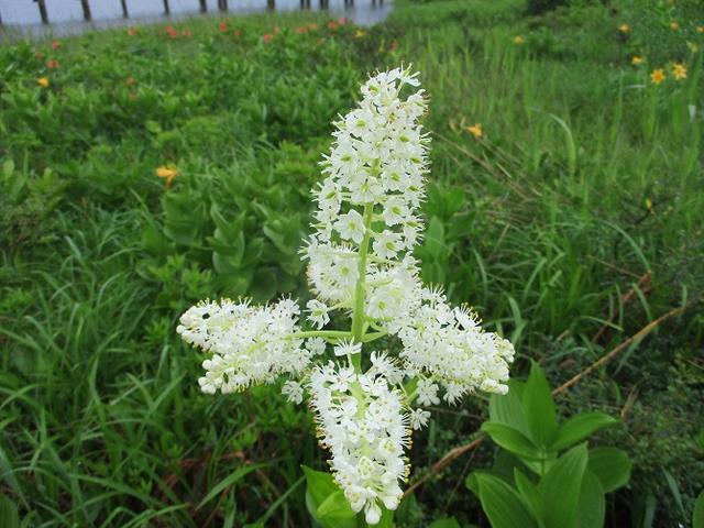 画像8: 6月24日より山旅会 「雄国沼と西吾妻山」 ツアーに行ってきました!