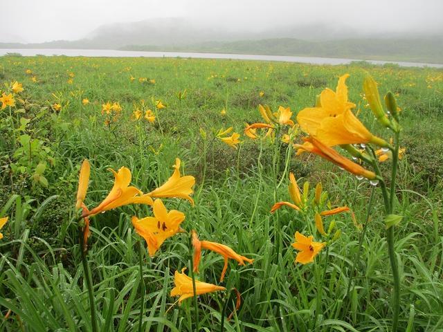 画像4: 6月24日より山旅会 「雄国沼と西吾妻山」 ツアーに行ってきました!