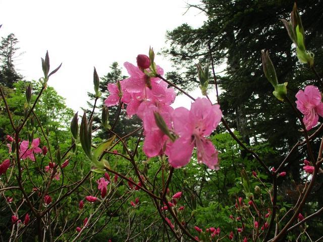 画像1: 6月24日より 「雄国沼と西吾妻山」 ツアーに行ってきました!
