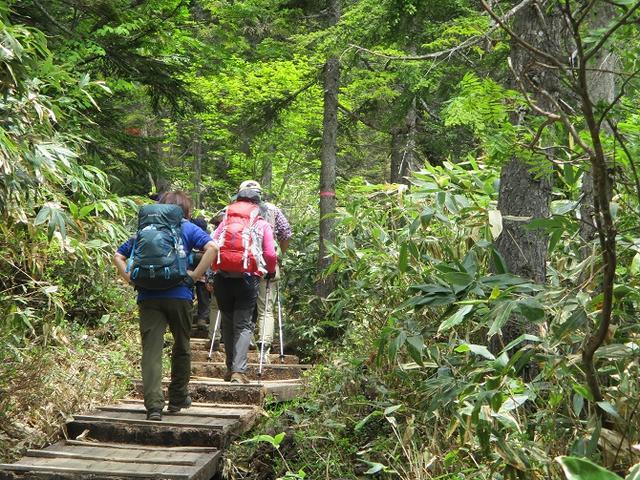 画像14: 6月20日から山旅会 「尾瀬ヶ原から尾瀬沼」 ツアーに行ってきました!