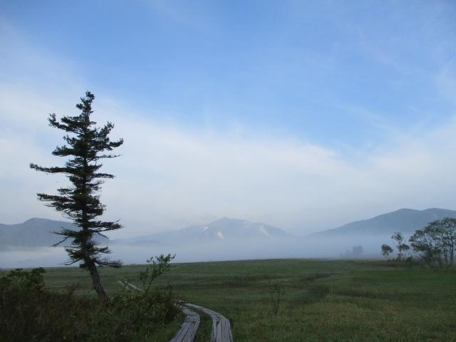 画像1: 6月20日から山旅会 「尾瀬ヶ原から尾瀬沼」 ツアーに行ってきました!