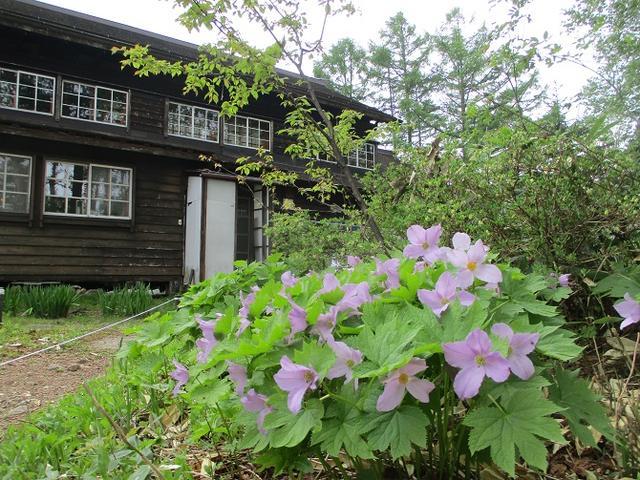 画像12: 6月20日から山旅会 「尾瀬ヶ原から尾瀬沼」 ツアーに行ってきました!