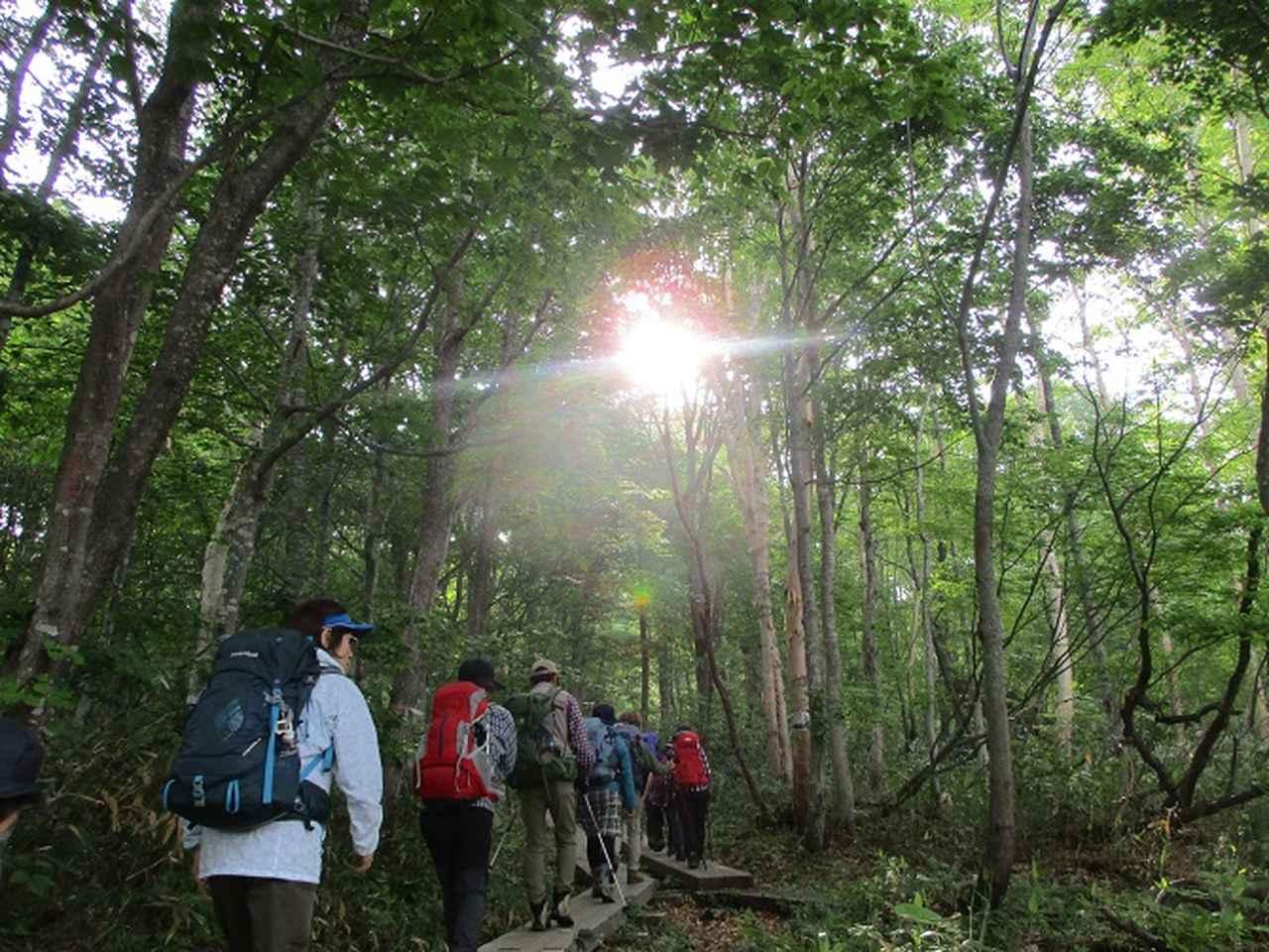 画像2: 6月20日から山旅会 「尾瀬ヶ原から尾瀬沼」 ツアーに行ってきました!