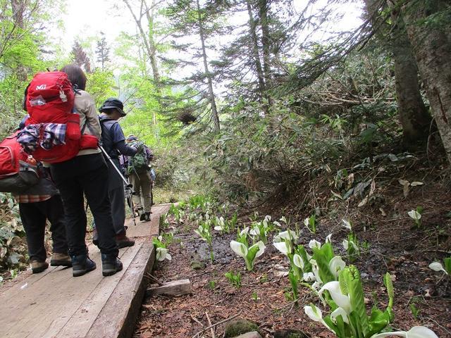 画像5: 6月20日から山旅会 「尾瀬ヶ原から尾瀬沼」 ツアーに行ってきました!