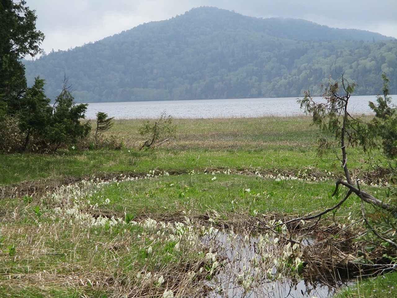 画像6: 6月20日から山旅会 「尾瀬ヶ原から尾瀬沼」 ツアーに行ってきました!