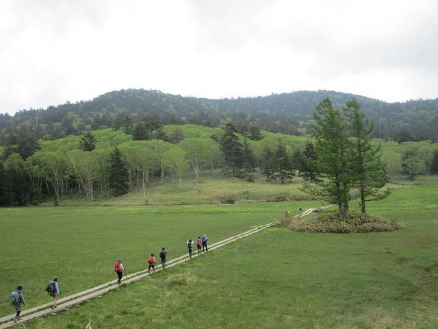 画像10: 6月20日から山旅会 「尾瀬ヶ原から尾瀬沼」 ツアーに行ってきました!