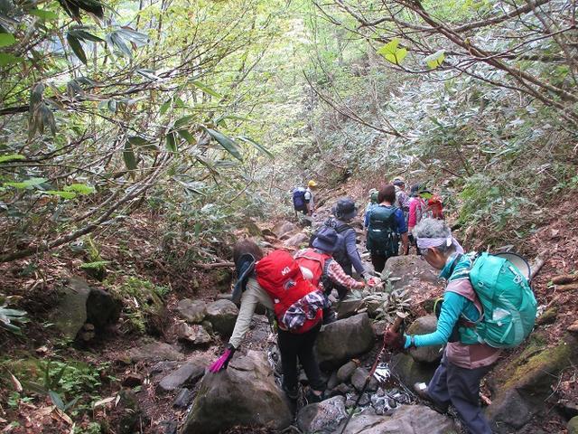 画像4: 6月20日から山旅会 「尾瀬ヶ原から尾瀬沼」 ツアーに行ってきました!
