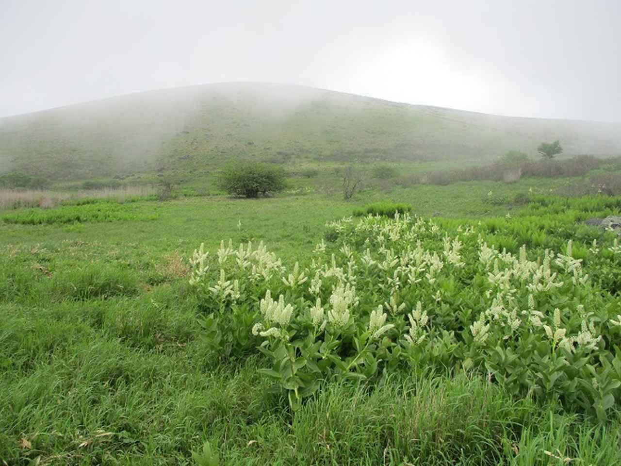 画像2: 7月の山旅会 「男女倉山」 ツアーの下見に行ってきました!