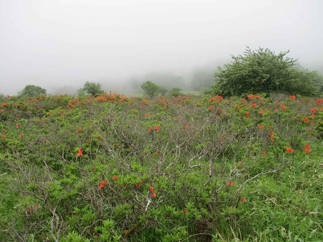 画像3: 7月の山旅会 「男女倉山」 ツアーの下見に行ってきました!
