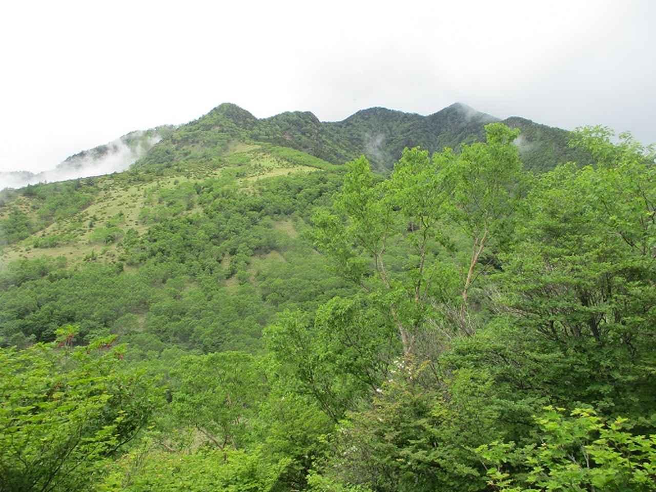 画像10: 6月28日に山旅会 「丸山」 ツアーに行ってきました!